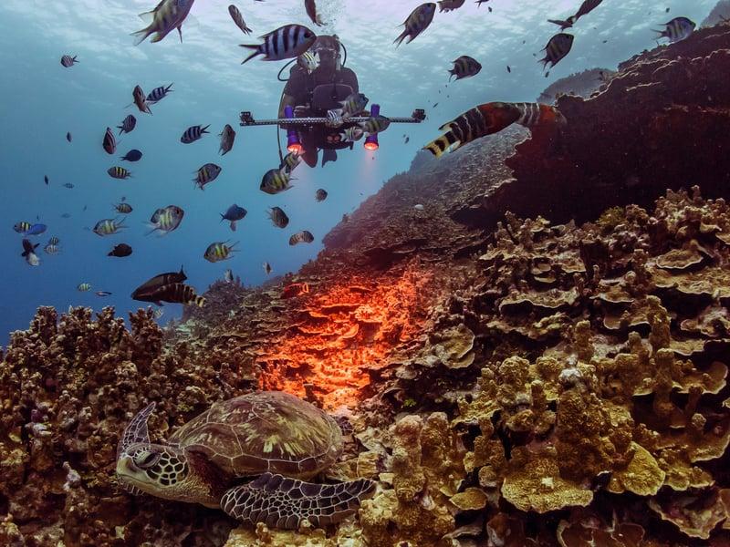 planblue_underwater image